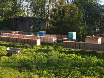 Виды пчелопакетов. Какой выбрать?
