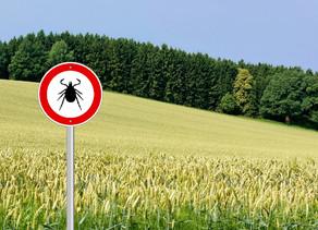 Lyme Disease Saved My Life!