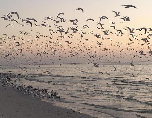 Birds Flying Marco.jpg