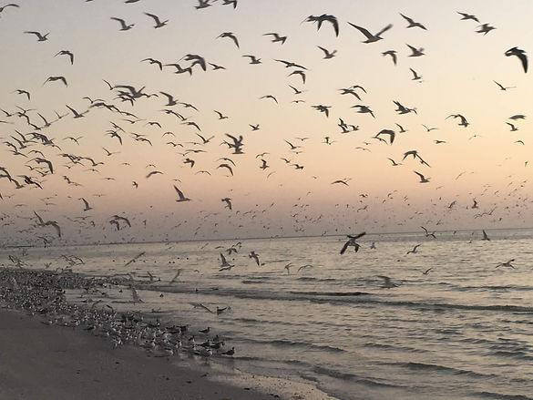 Marco Birds.JPG