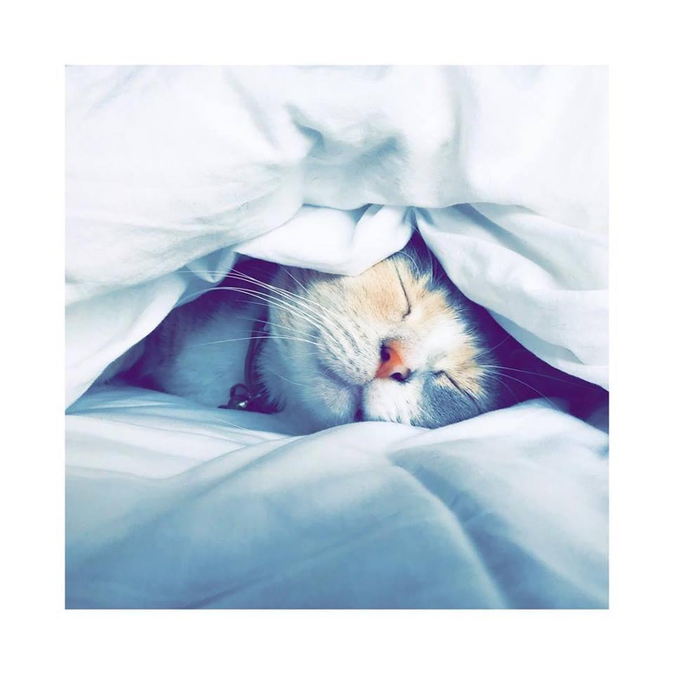Acupuncture Kitten