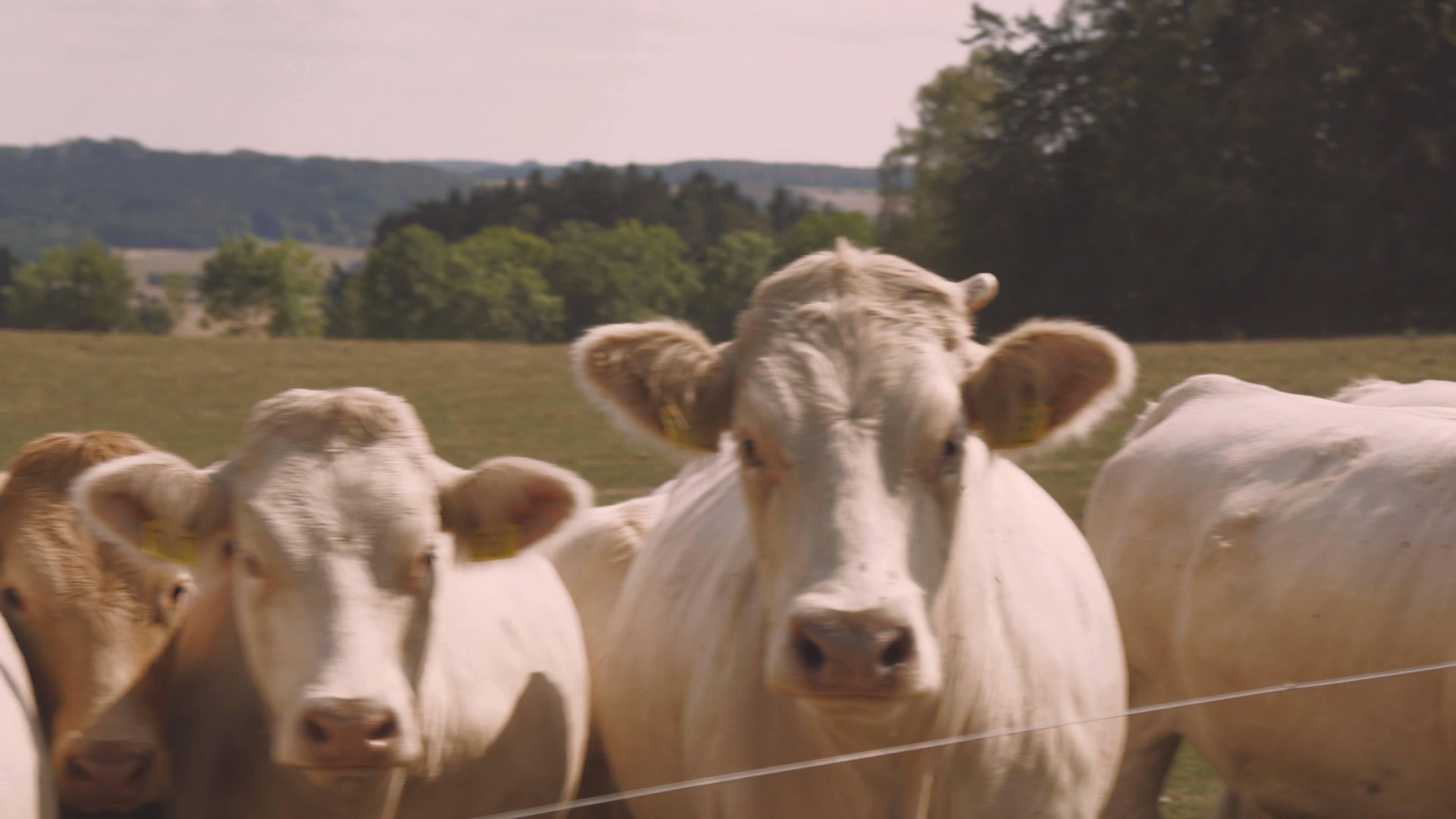Klacky pod nohama #2: Co zemědělcům znepříjemňuje život