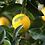 Thumbnail: Huile essentielle de citron, 10 ml