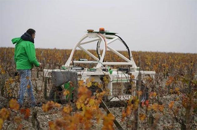 robot vineyard worker