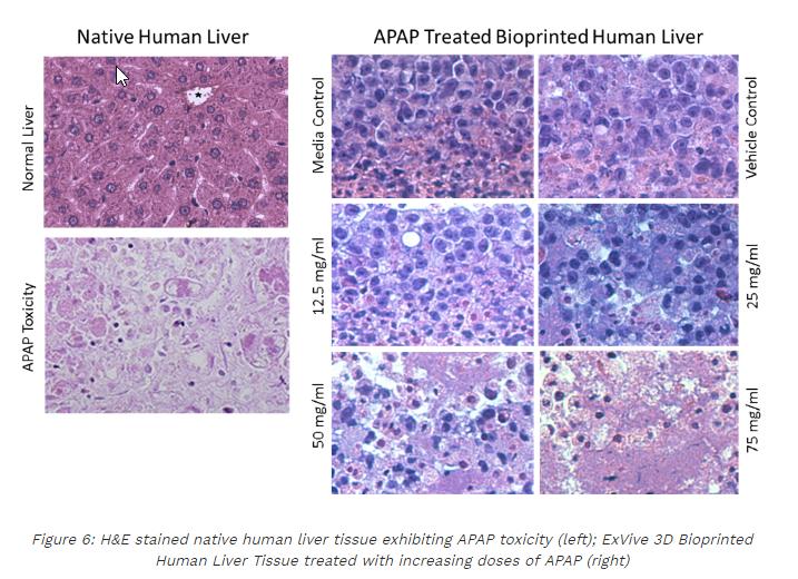 Organovo demonstrate toxicity testing with ExVive liver product. Image via Organovo