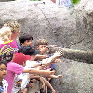 Auckland Zoo Development