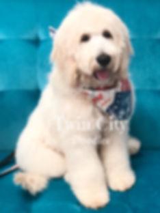 Samson 4 months