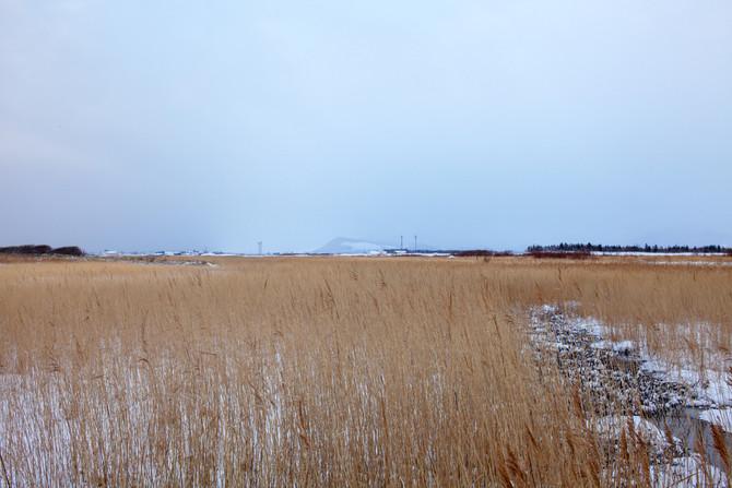 湿原 原風景