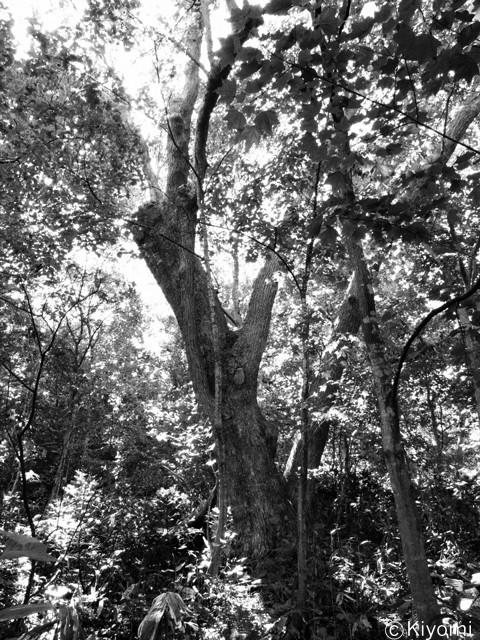 木は知っている