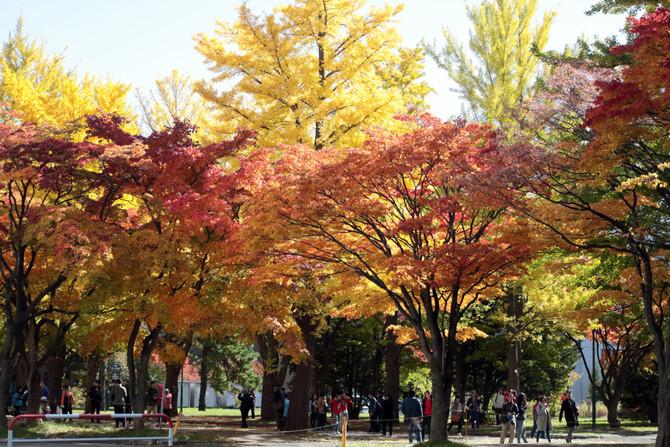 北大キャンパス紅葉散歩日和