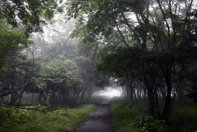 濃い霧の日