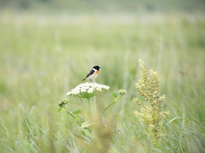 6月の湿原