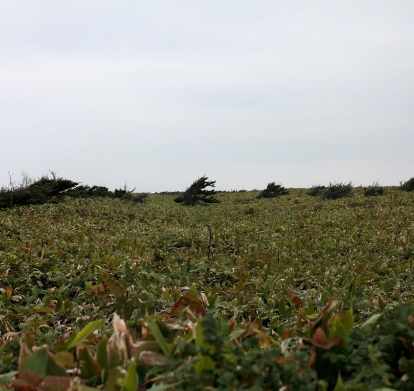 エサヌカ原生花園の風景