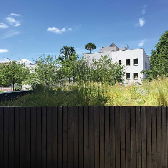 Focus sur les toitures vegetalisées