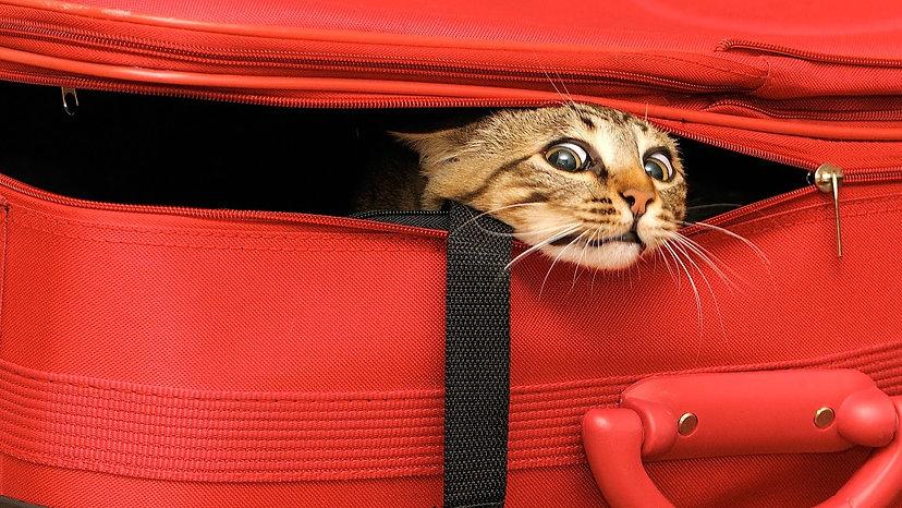 Cat Baggage