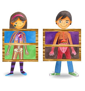 kids-body-anatomy-human-anatomy-diagram-
