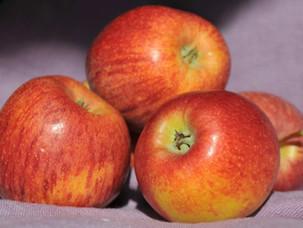 Vieraskynä: Kasvikset, marjat ja hedelmät ravitsemussuosituksissa