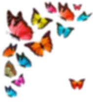 colourful butteflies