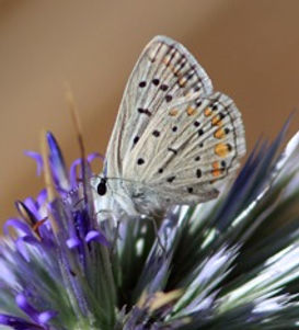 white butterfly over purple flowers