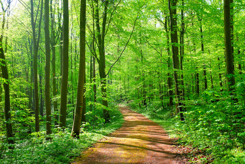 nature forest with path
