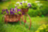 Gypsy Rose flowers in a bicycle basket in a meadow