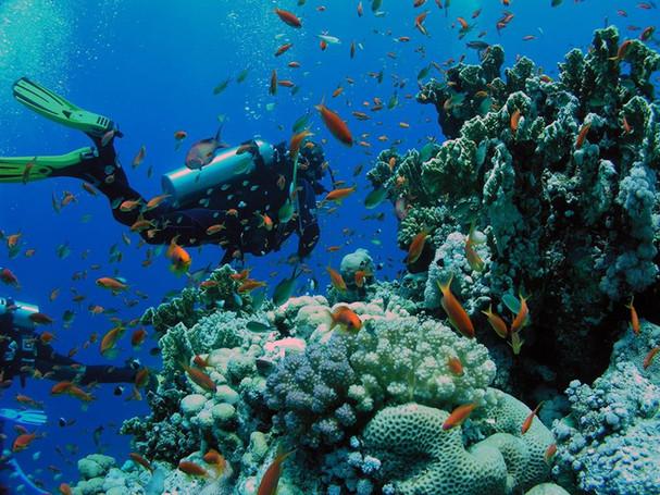 Los mejores destinos para bucear en República Dominicana!