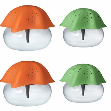 Orange & Green Starfish Promotion.jpg