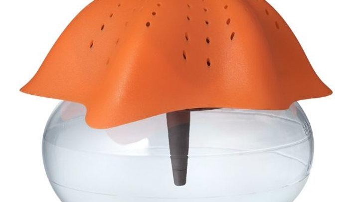 Clearance Sale 1 - Green OR Orange Starfish