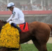 Justify is on his way to the Big Sandy in bid for a Triple Crown after a gutsy win at the Preakness