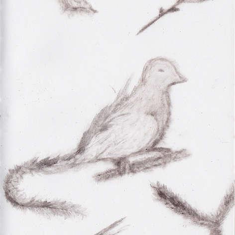 Branches, Bird, Blossom & Leaf
