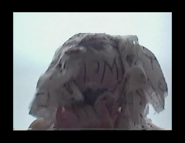Video - loop - Photo rights Andrzej Skrzypkowski