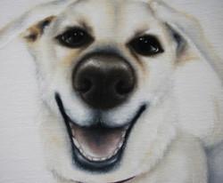 pet commission portraits painting