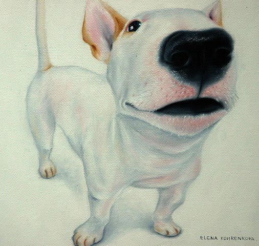 humorous quirky pet portrait