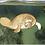 Thumbnail: Bronze Manatee Sculpture Shadow Box