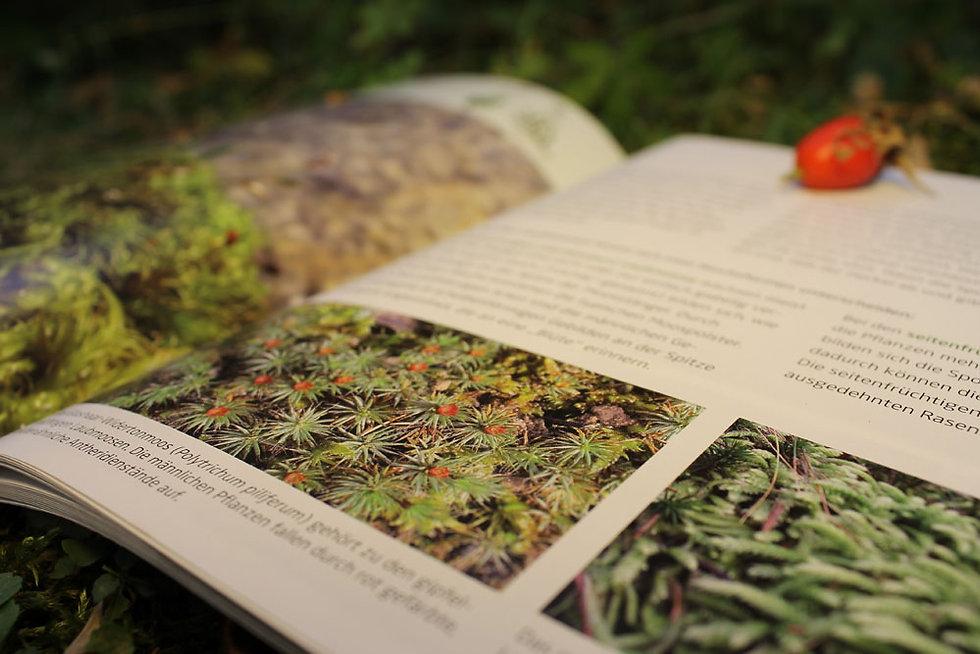 Arbeitsbeispiel von Wolfwerbeagentur für den Botanischen Garten Tübingen