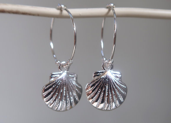 Silver Scallop Shells