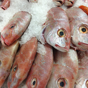 Fish - a slippery subject