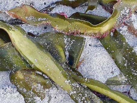 Something Green Part 5 - Sea Vegetables