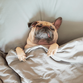 How to have Healthy Sleep