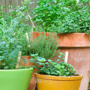 Something Green Part 4 - Healthy Herbs