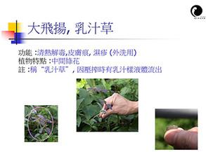 香港常見中草藥講座   22/5/2011