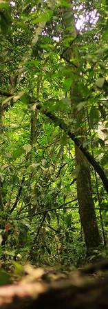 Bom Jardim floresta 1_.jpg