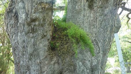 boom met gras.JPG