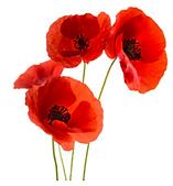 Fleur Cap Emploi.PNG