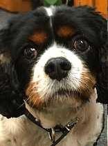 Security Dog Buddy Wilde. Team Wilde of West Malling