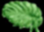 Tropical%2520Leaves%25208_edited_edited.