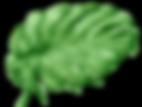Tropical%252520Leaves%2525208_edited_edi