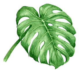 Tropical%20Leaves%207_edited.png