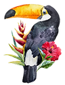 Toucan_edited_edited.png