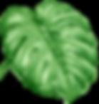 Tropical%2520Leaves%25207_edited_edited.